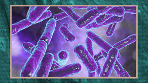 Make-up of gut microbiome may influence COVID-19 severity